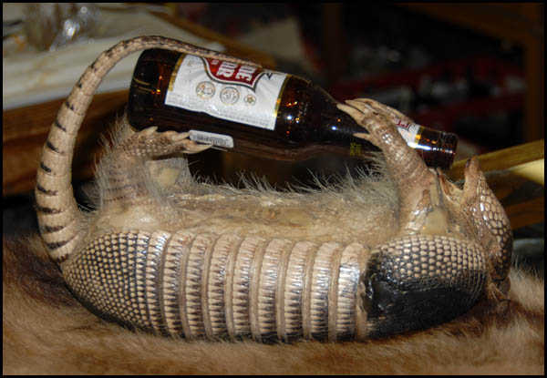 http://www.bayespix.com/armadillos/images/armadillo_drinking.jpg